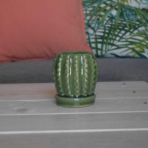 petit-bruleur-cactus